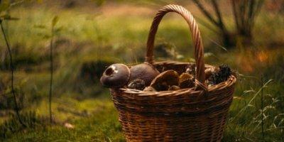 Роспотребнадзор напоминает правила профилактики отравлений грибами