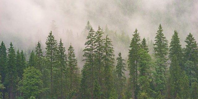 МЧС напоминает правила пожарной безопасности в лесу