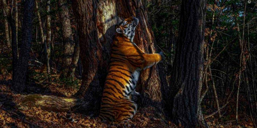 Стартует флешмоб «Люби природу как тигр»