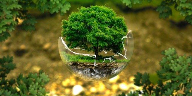 Жители Псковской области могут присоединиться к экологической онлайн-викторине