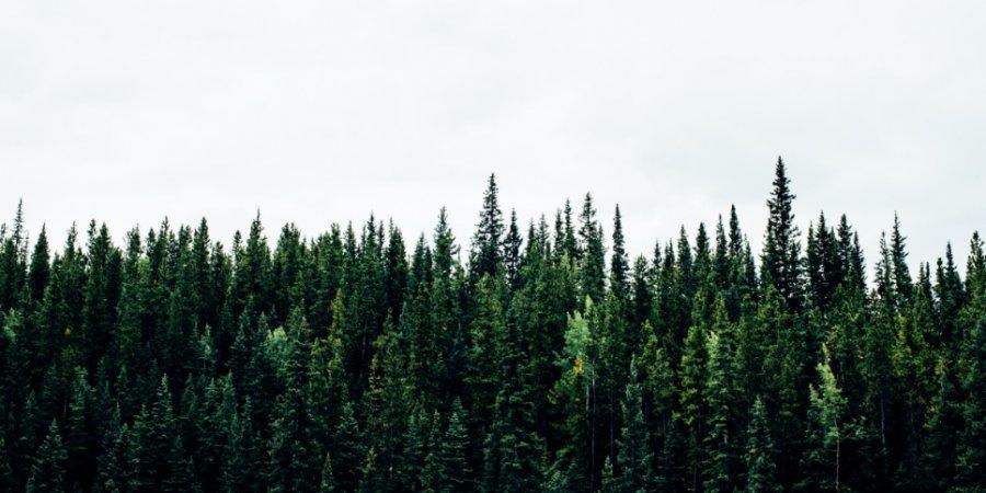 150 представителей природоохранных ведомств вошли в экологический совет