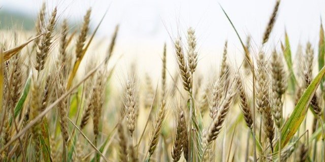 В России запустят систему отслеживания зерна от производства до реализации